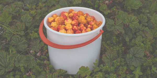 https://goodbubble.co.uk/uploads/images/cloudberries.png